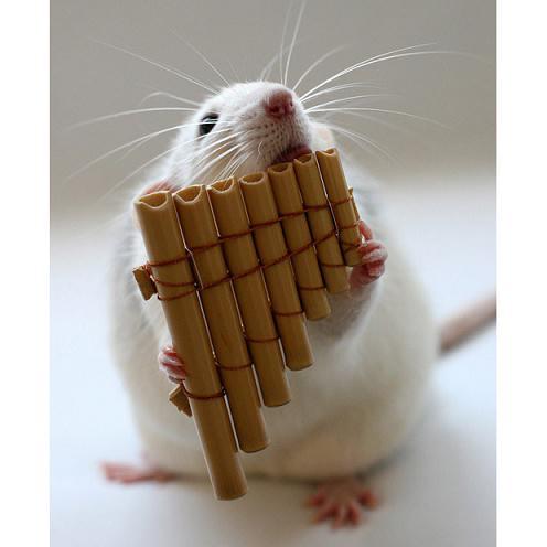 排笛新年好乐谱