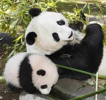 亚特兰大动物园大熊猫双胞胎启程返回中国